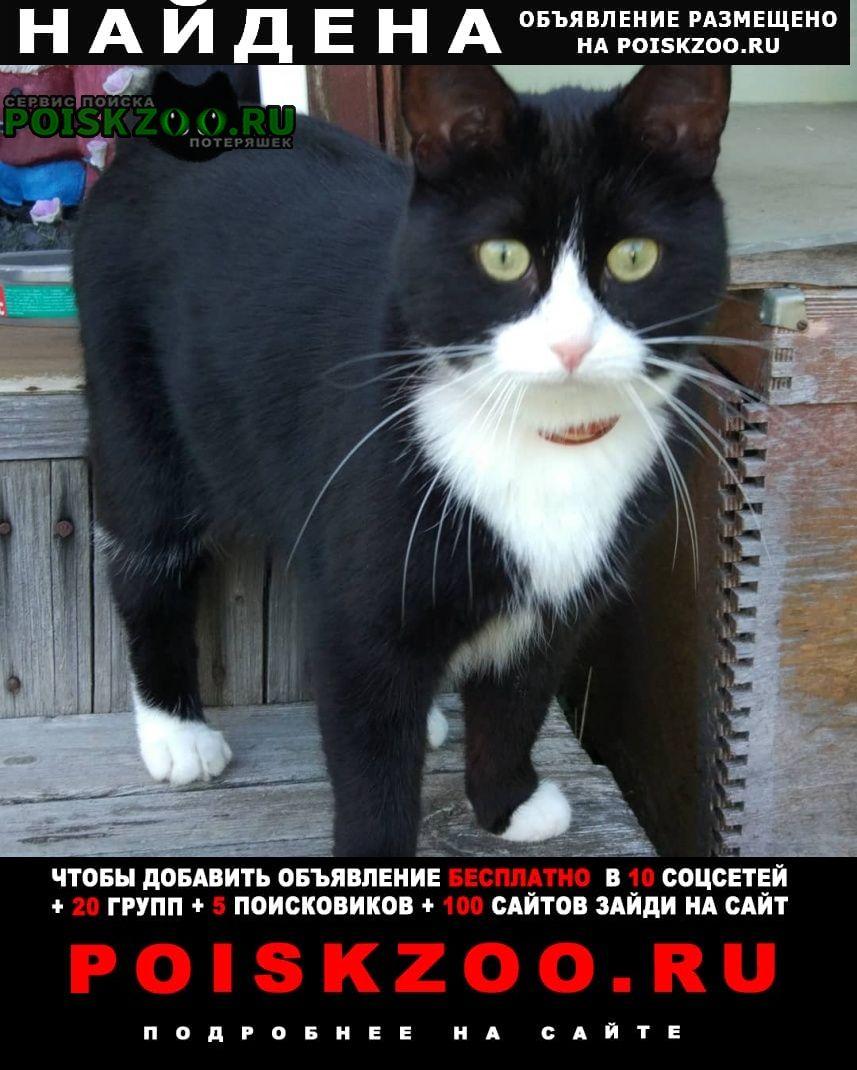 Найдена кошка Серпухов