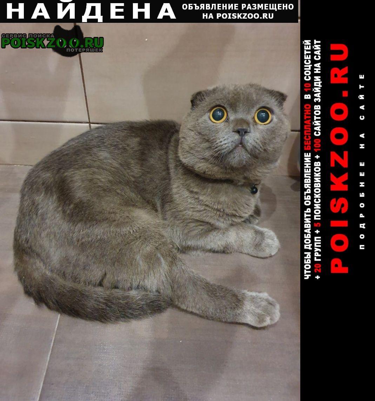Найден кот некастрированный. вислоухий британец Москва
