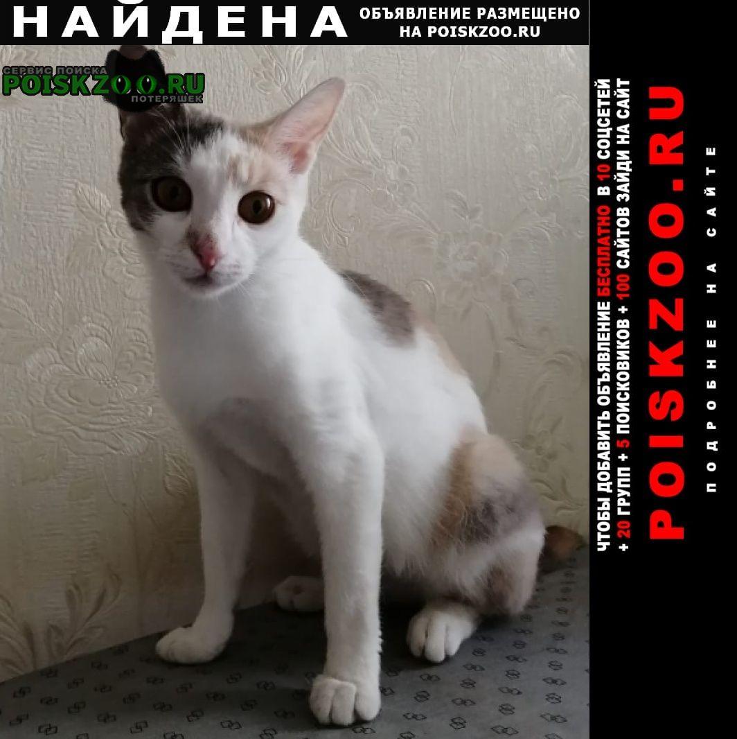 Найдена кошка телый стан дом 5к4 Москва