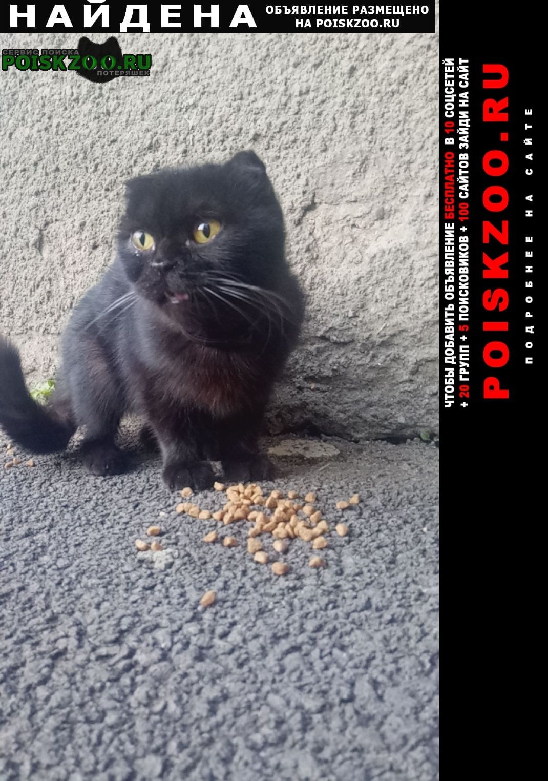 Найдена кошка черная вислоухая Ставрополь