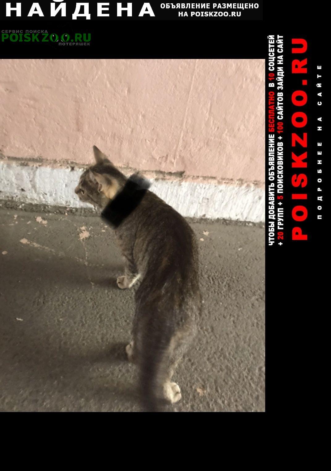 Найдена кошка васильевский осторов дом 56 Санкт-Петербург