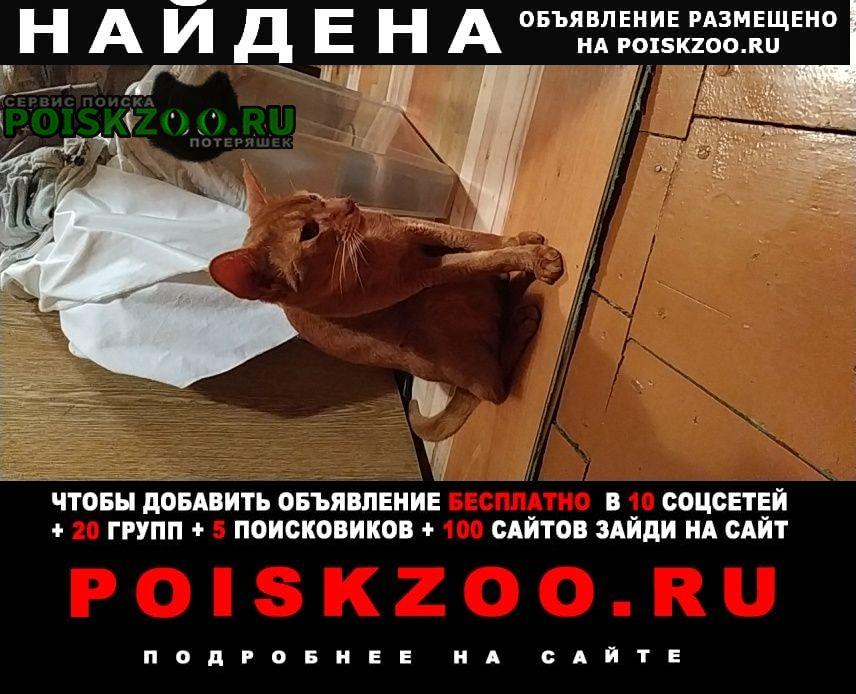 Найден кот в деревне брёхово частный сек Солнечногорск