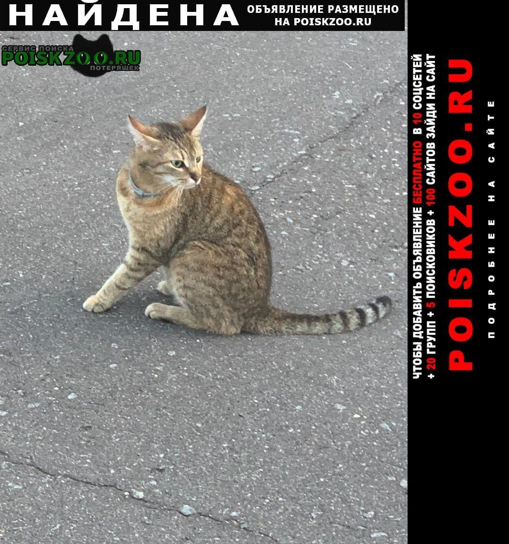 Найдена кошка шаганино, калужское и варшавское шоссе Подольск