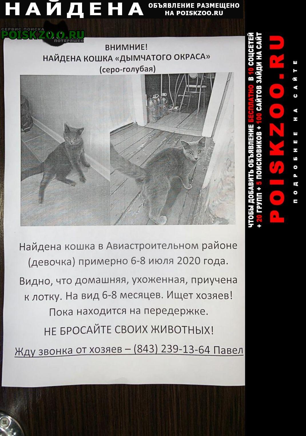 Найдена кошка авиастроительный район Казань