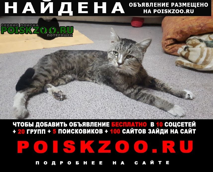 Найден кот в районе старой пристани Балаково