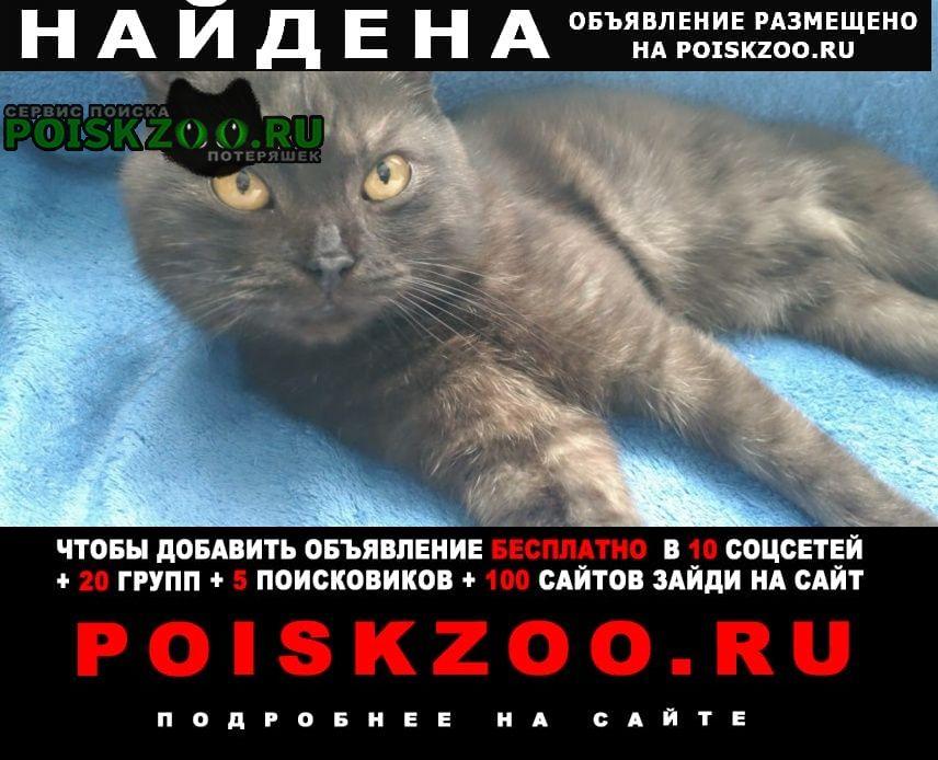 Найден кот на улице дорожная 20 Москва