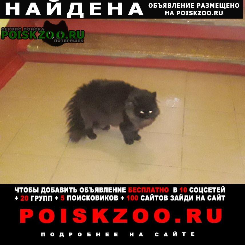 Найдена кошка филевский парк Москва