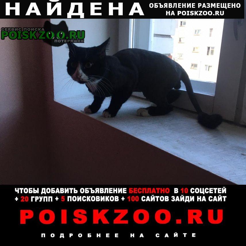 Найден кот стриженный Калуга