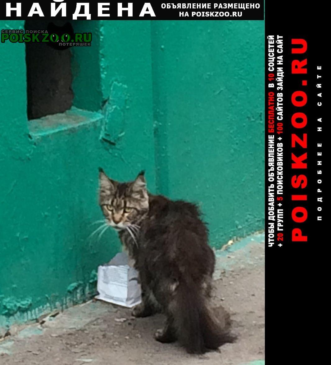 Найдена кошка мейн-кун Москва