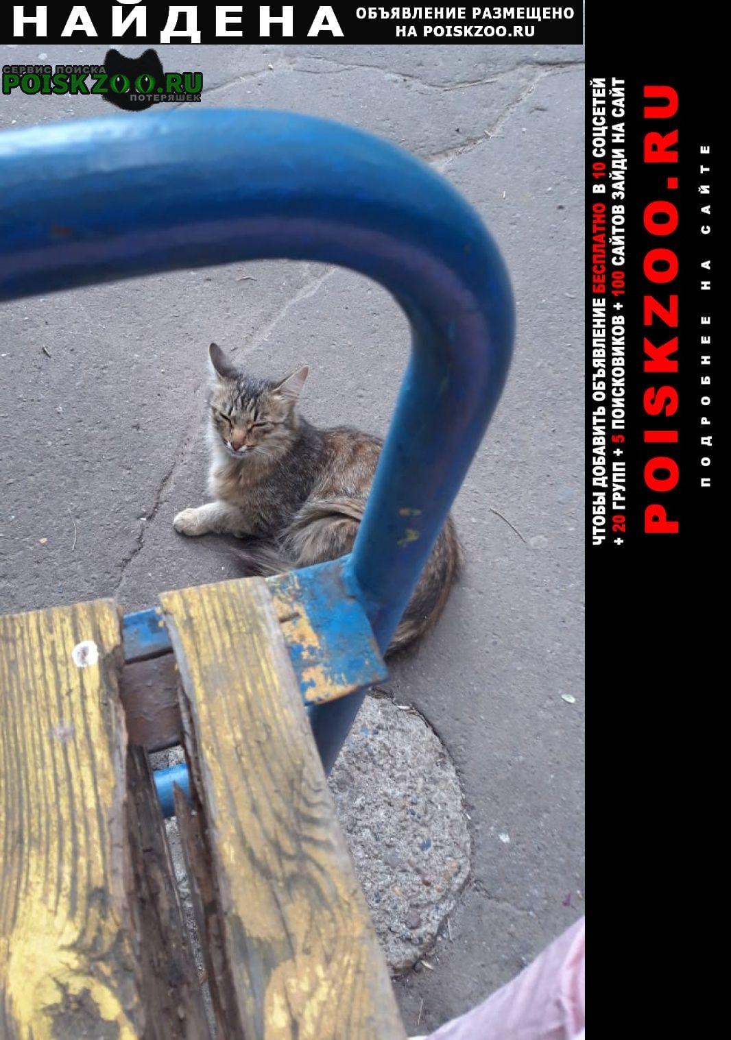 Найдена кошка двор минская 12 Казань