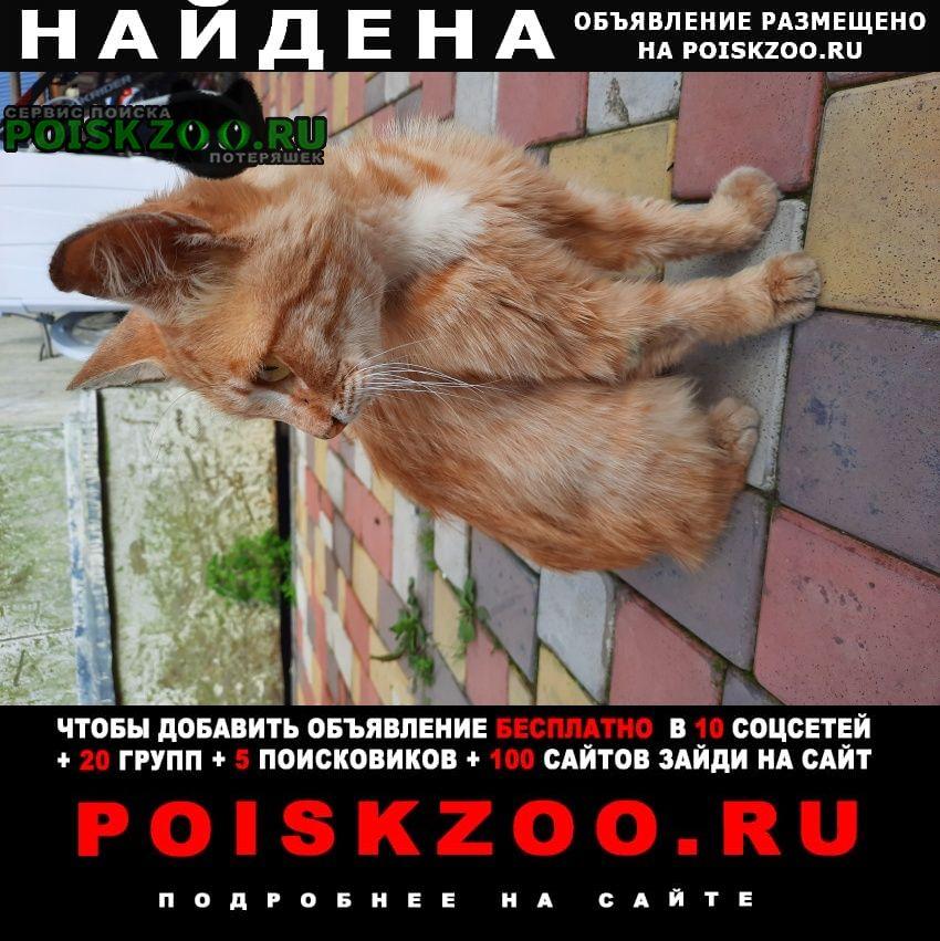 Найден кот рыжий Люберцы