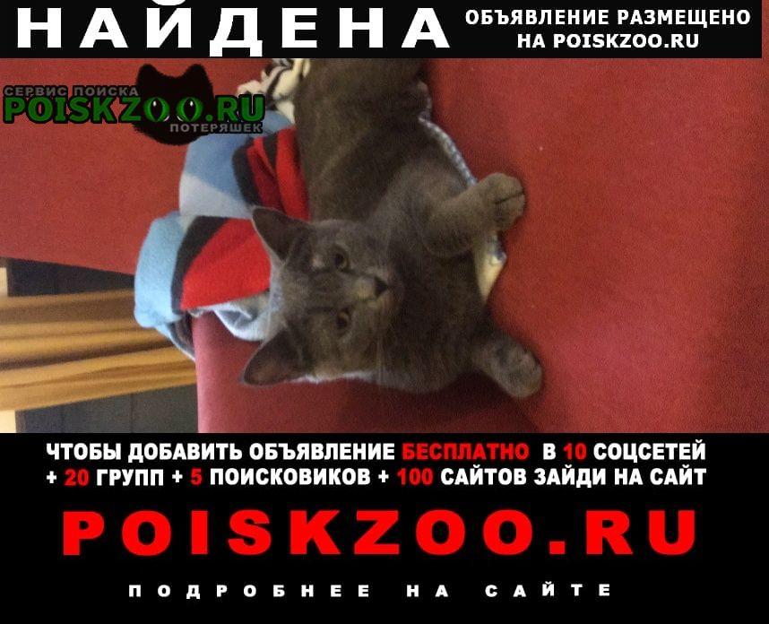 Найдена кошка серая Голицыно (Московская обл.)