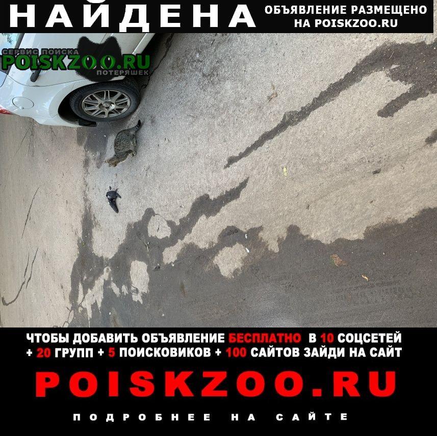 Найдена кошка улица малыгина, около дома 1 корпус 2, Москва