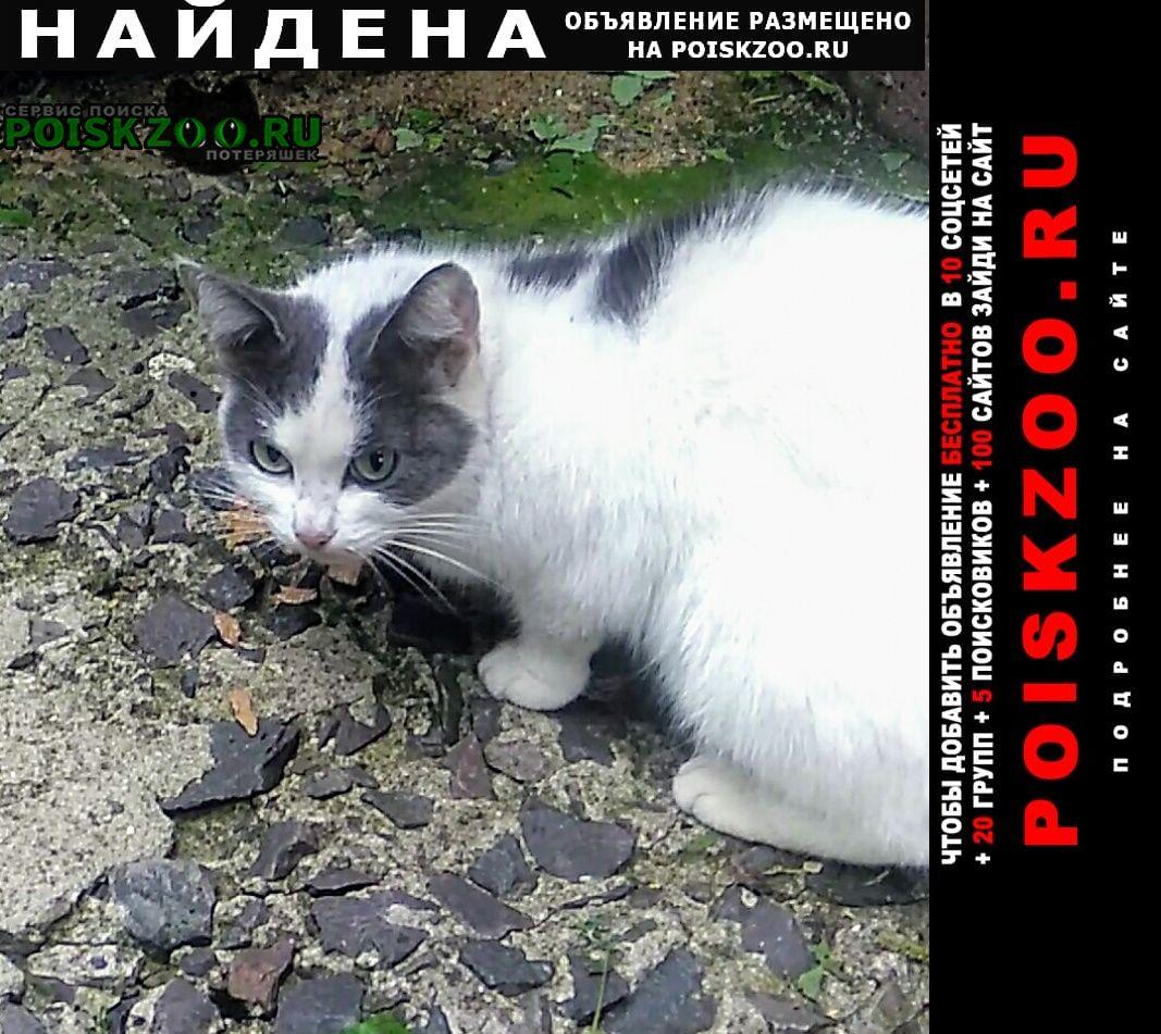 Найдена кошка кто потерял кошку ? Загорянский