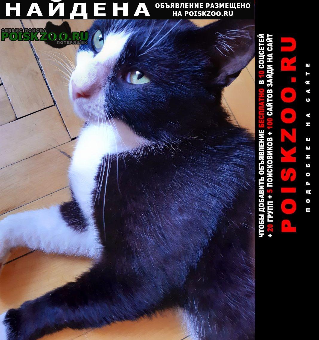 Найдена кошка потеряшка Москва