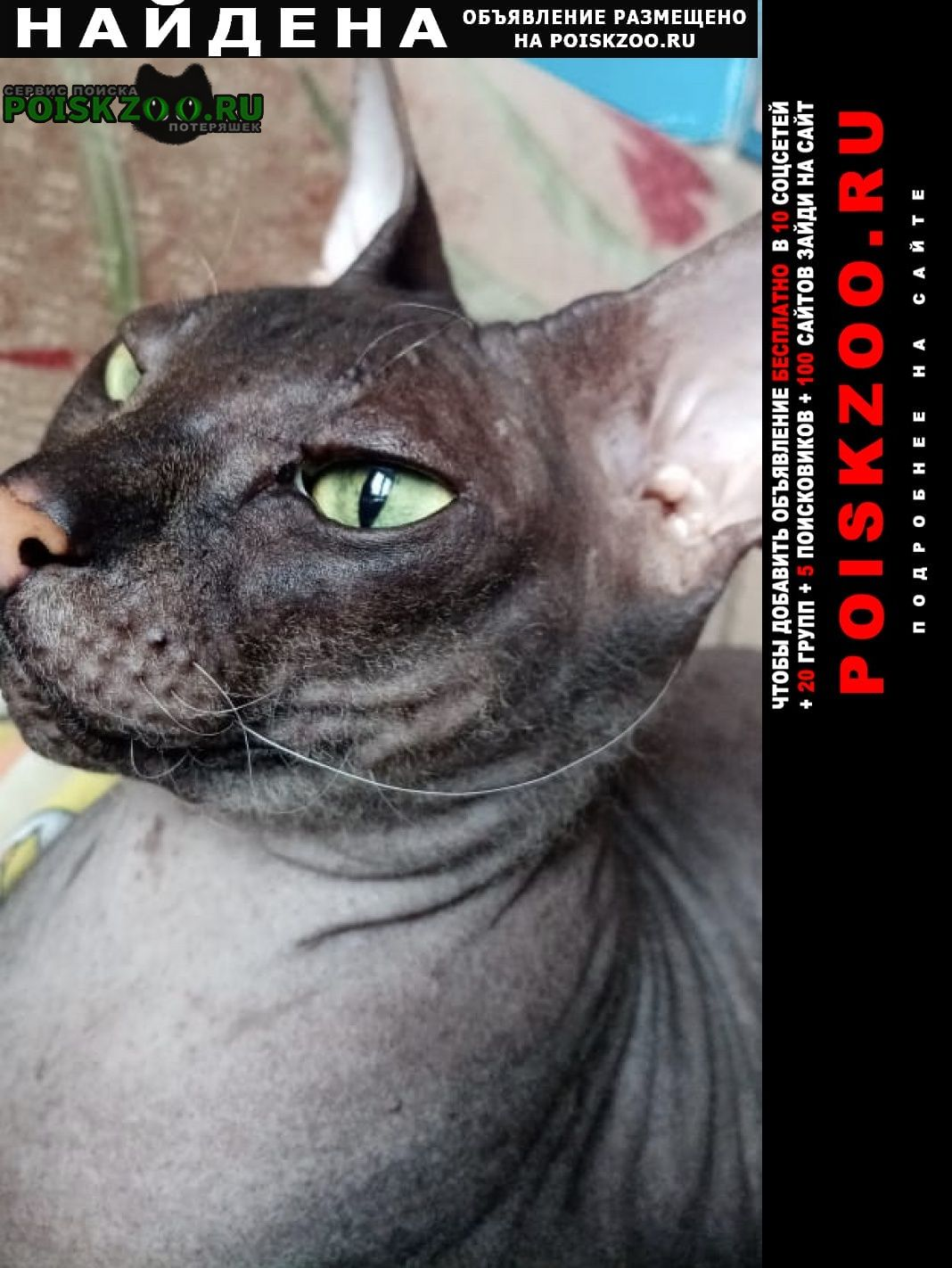 Найдена кошка сфинкс Стерлитамак