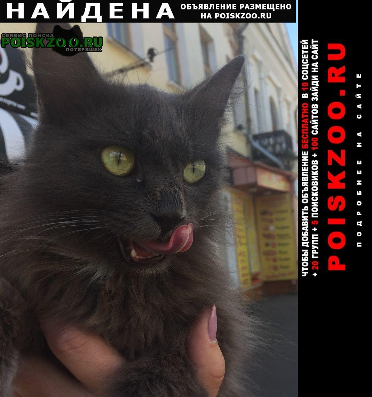 Найдена кошка кошечка Мичуринск
