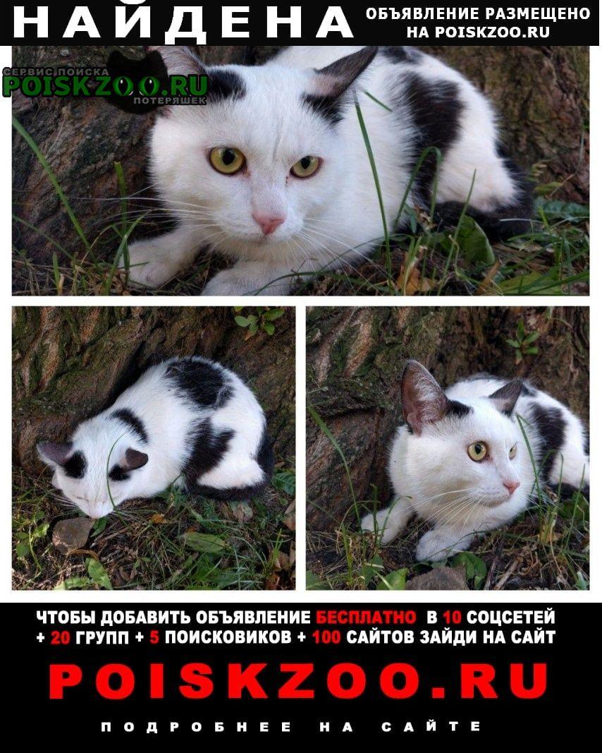 Найдена кошка цвета арлекин Санкт-Петербург