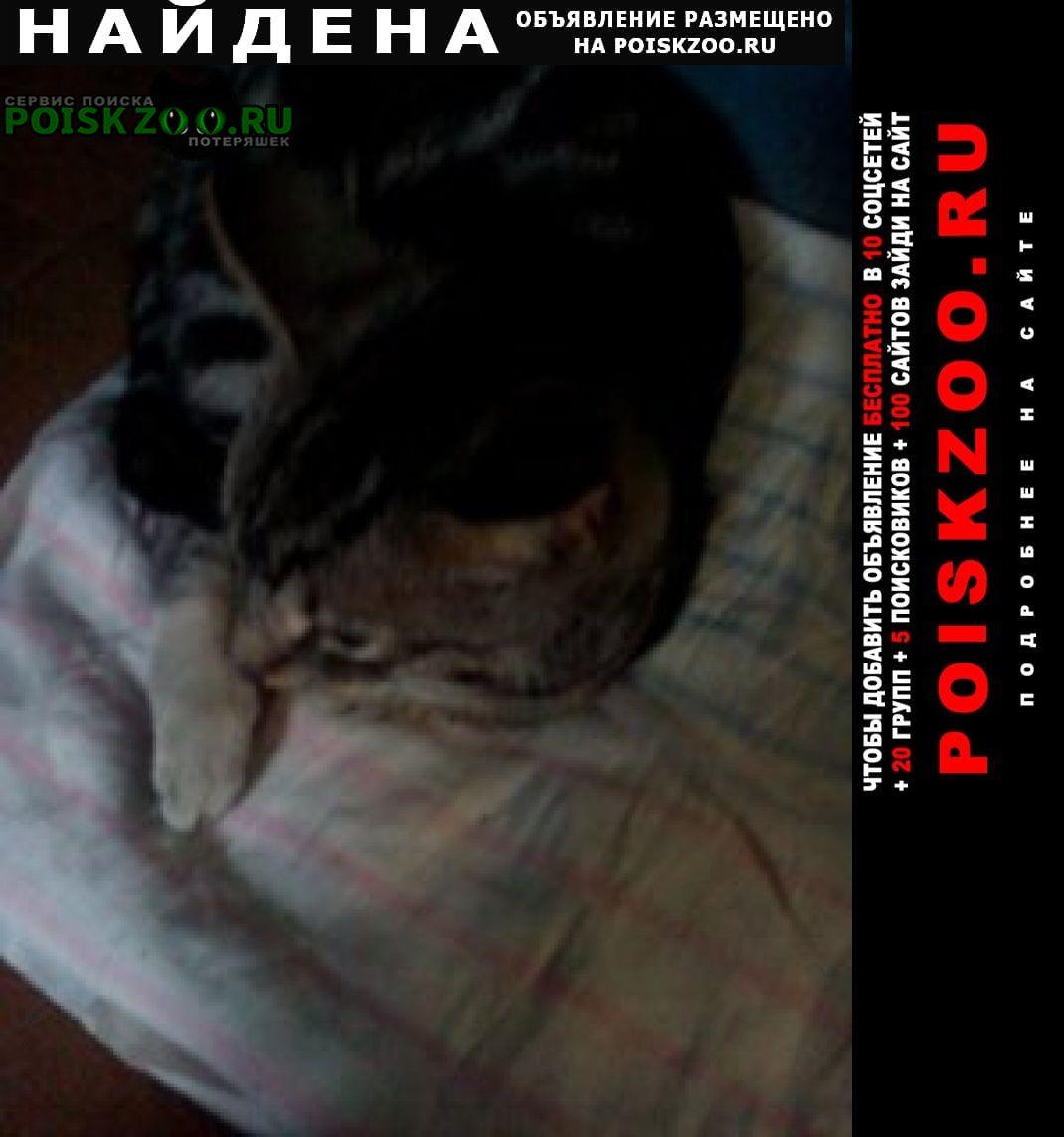 Найдена кошка кот серый с белой задней лапкой Санкт-Петербург