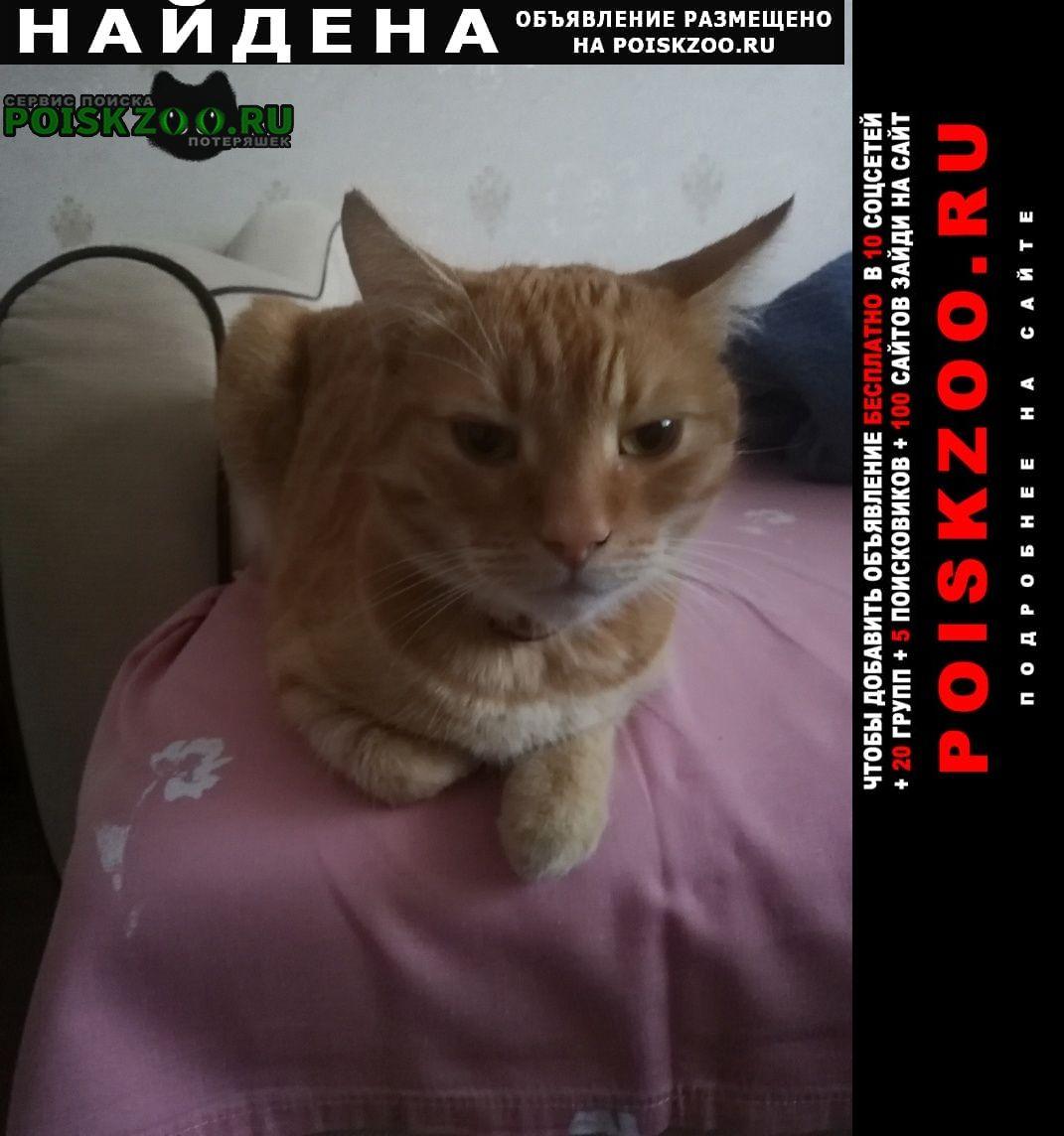 Найдена кошка на Московский