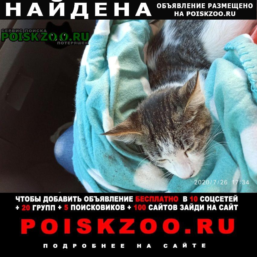 Найдена кошка домашняя. Санкт-Петербург