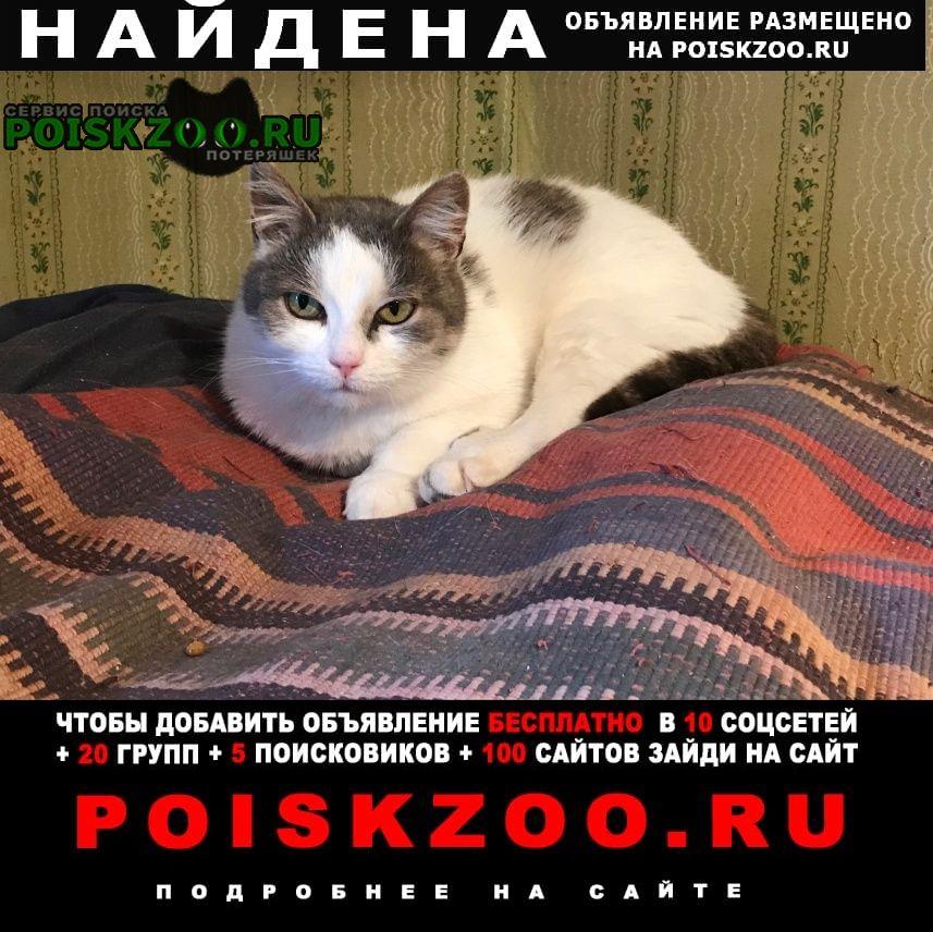 Найдена кошка Валдай