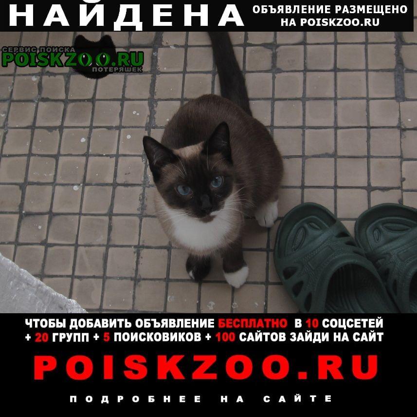 Найдена кошка    - ювао Москва