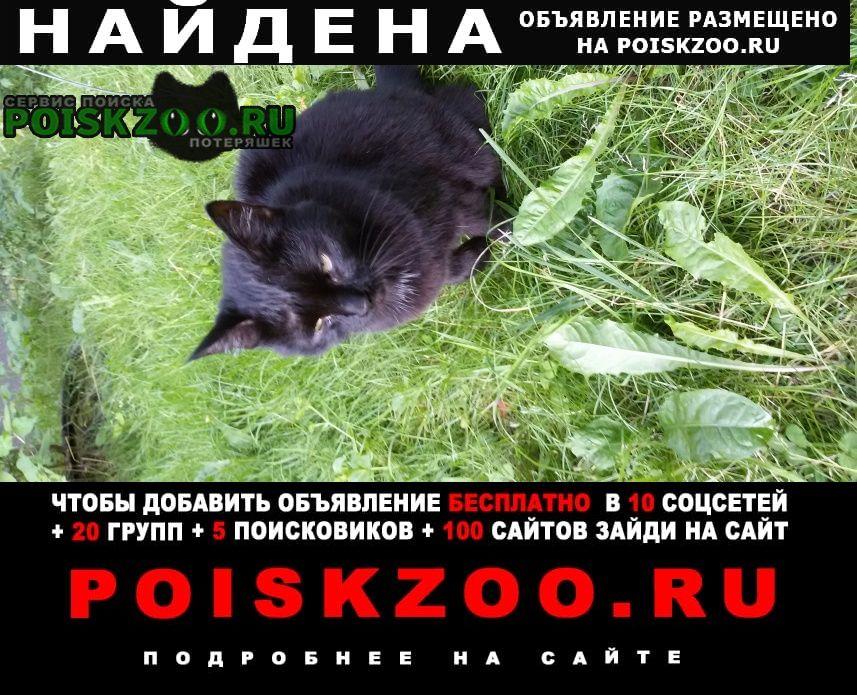 Найдена кошка черная Москва
