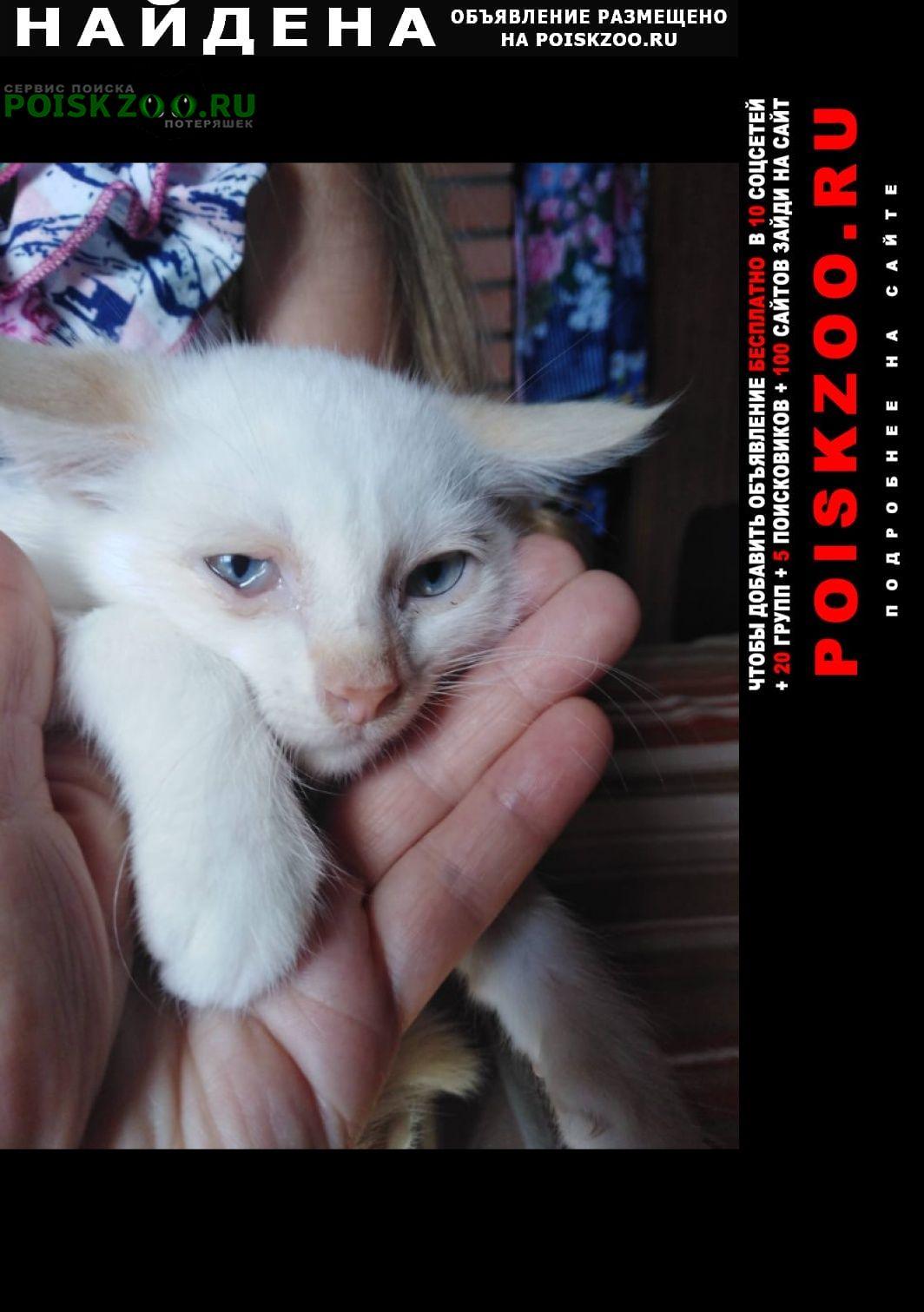 Найдена кошка котёнок, возраст около 2-3 мес Можайск
