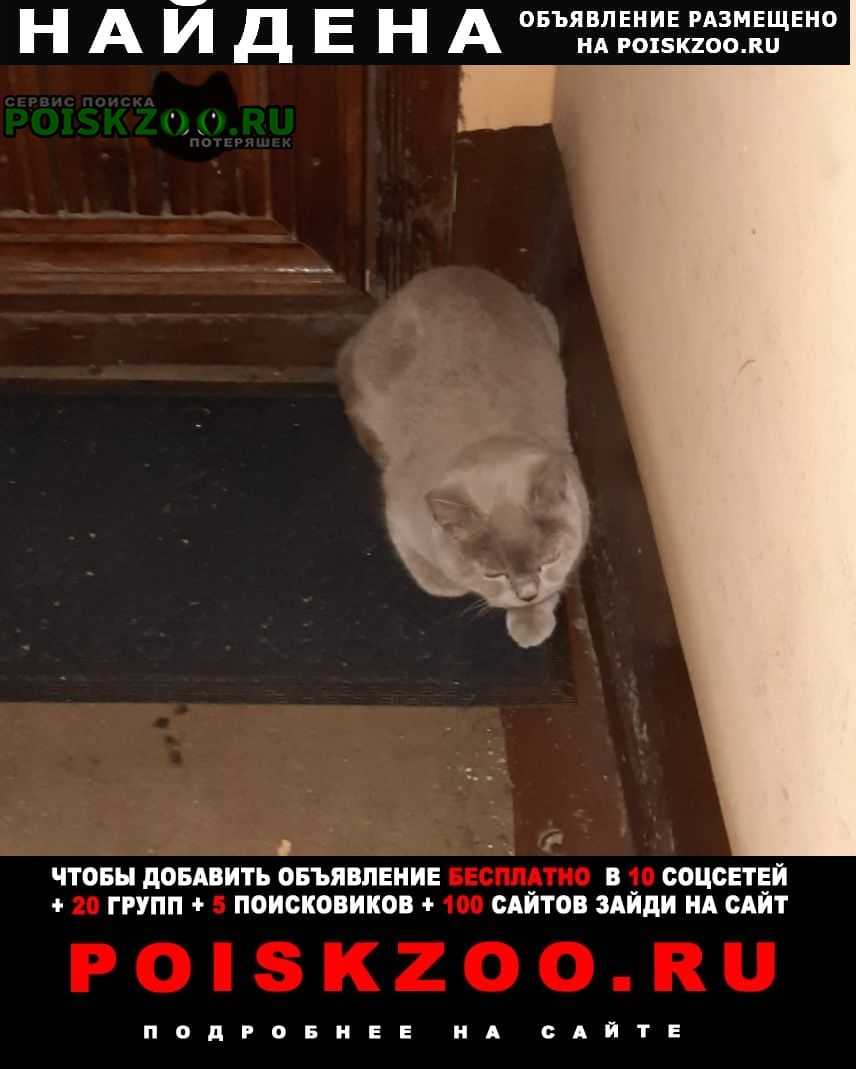 Найдена кошка спб морской пехоты Санкт-Петербург