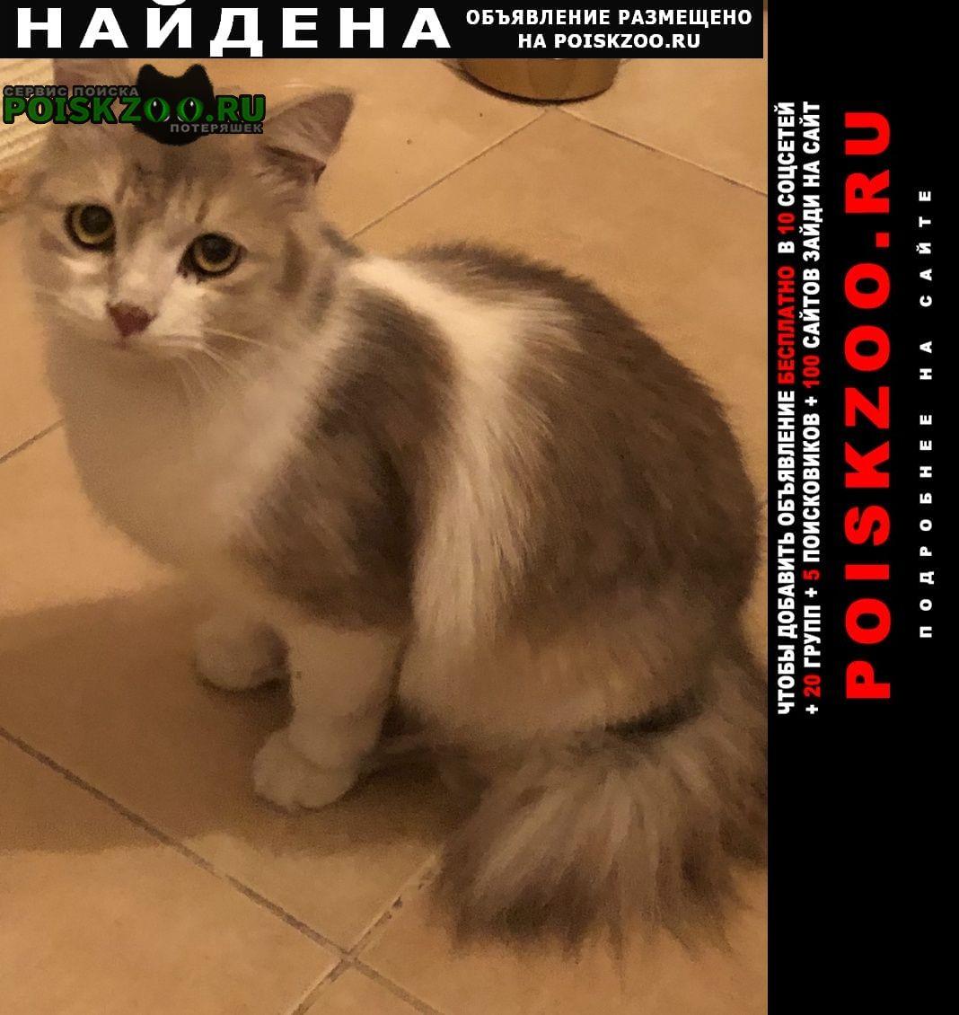 Найдена кошка в районе улицы удальцова 87 Москва