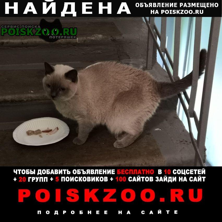 Найдена кошка. предположительно, тайская Москва