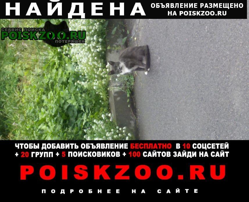 Найдена кошка кировский р-н Санкт-Петербург