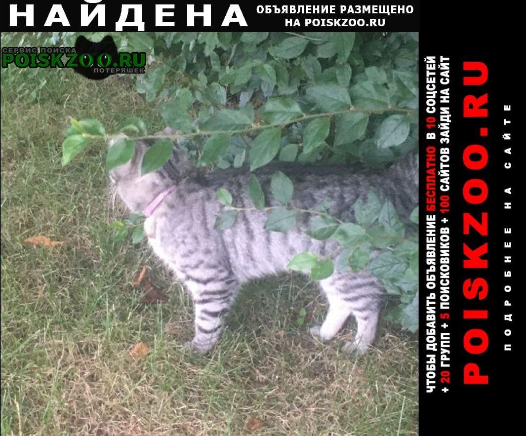 Найдена кошка серая с розовым ошейником. марьино. Москва