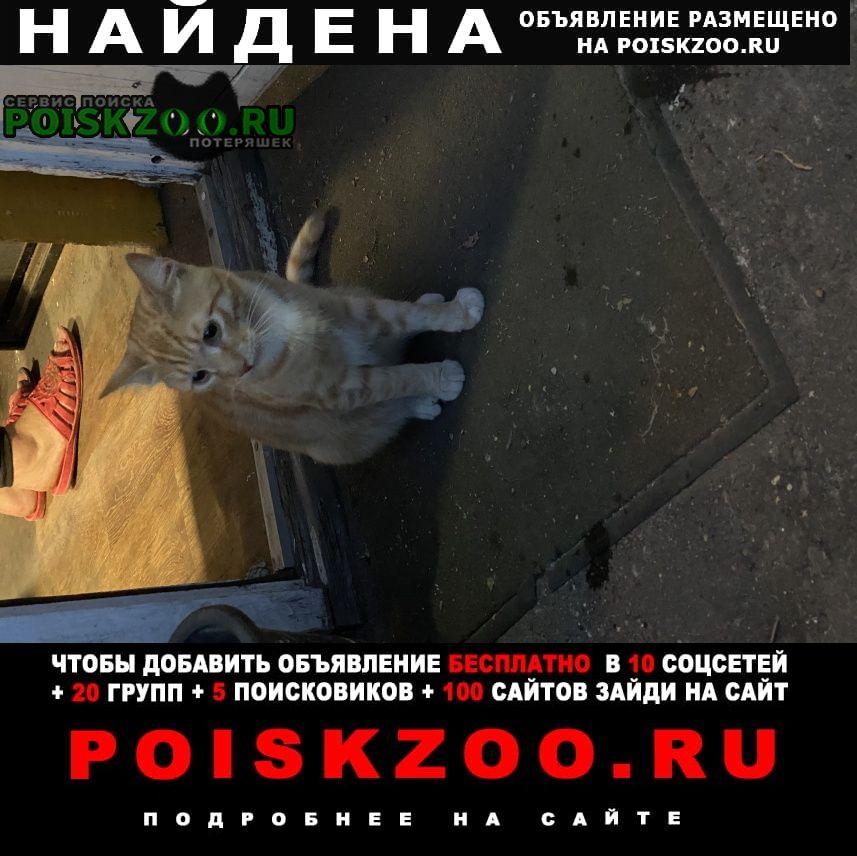 Найдена кошка молодой котик рыжий (некрасовка, люберцы) Москва