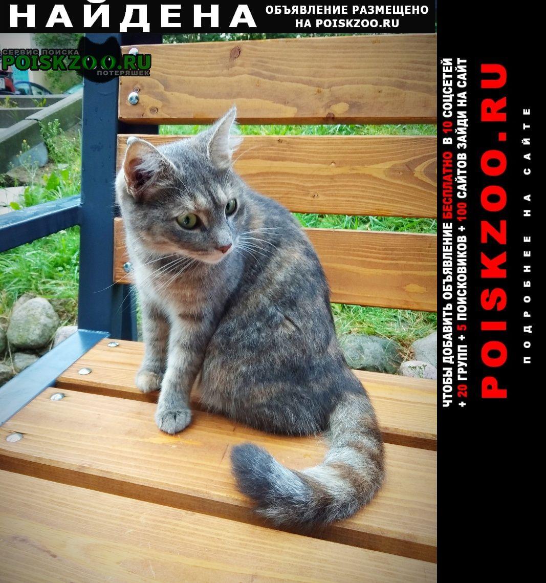 Найдена кошка Минск