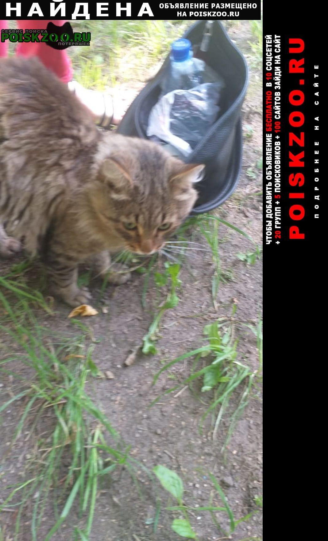 Найдена кошка кот серого цвета, пушистый Москва
