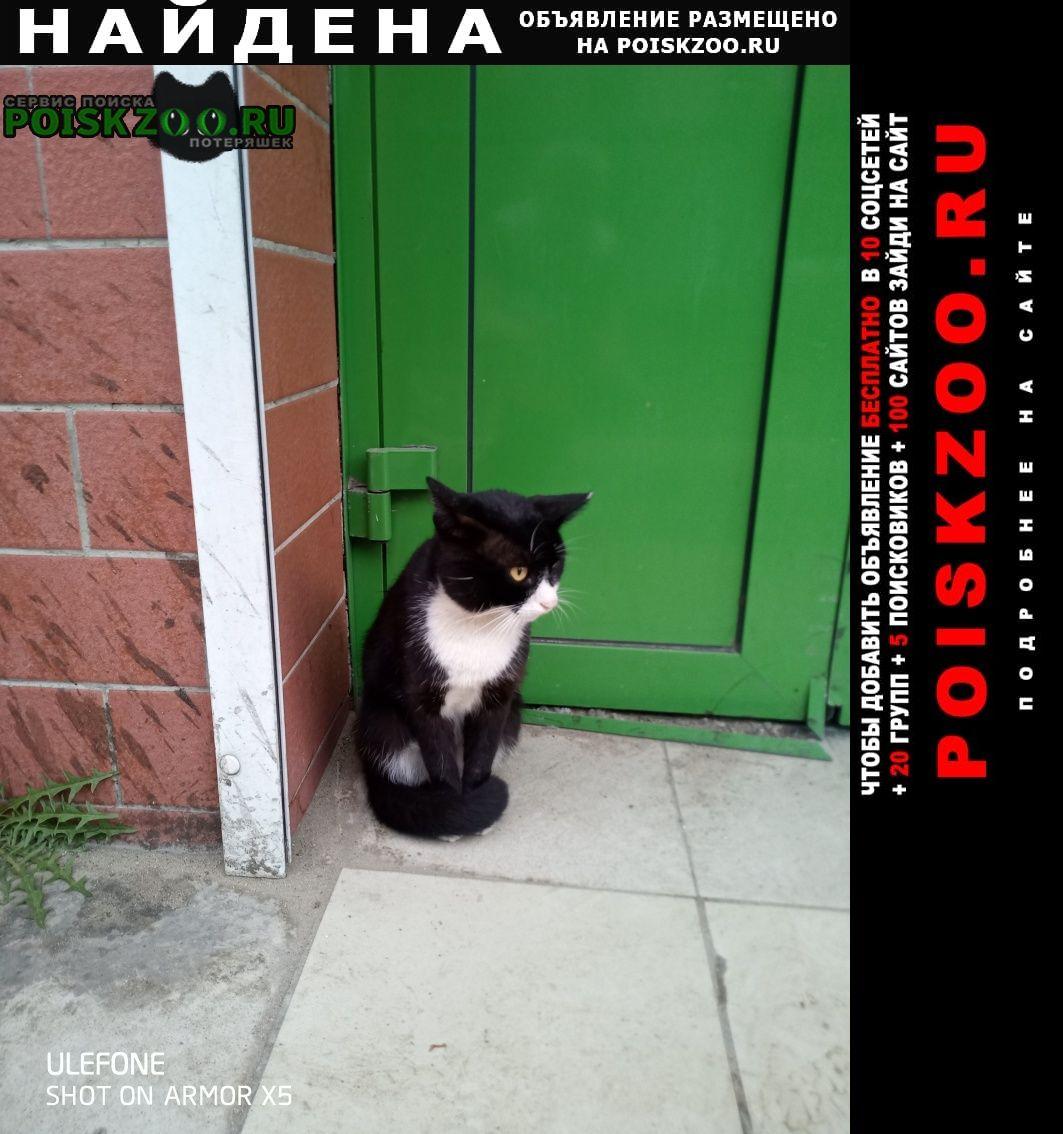 Найдена кошка ул. балябина, магазин хлеб соль Чита