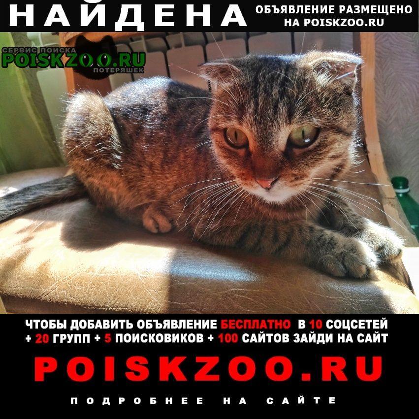 Найдена кошка.. Ставрополь