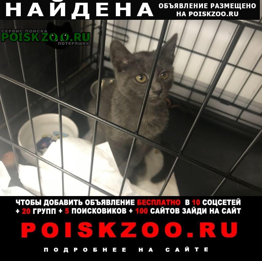 Найдена кошка очаровательная, игривая, умница Нижний Новгород