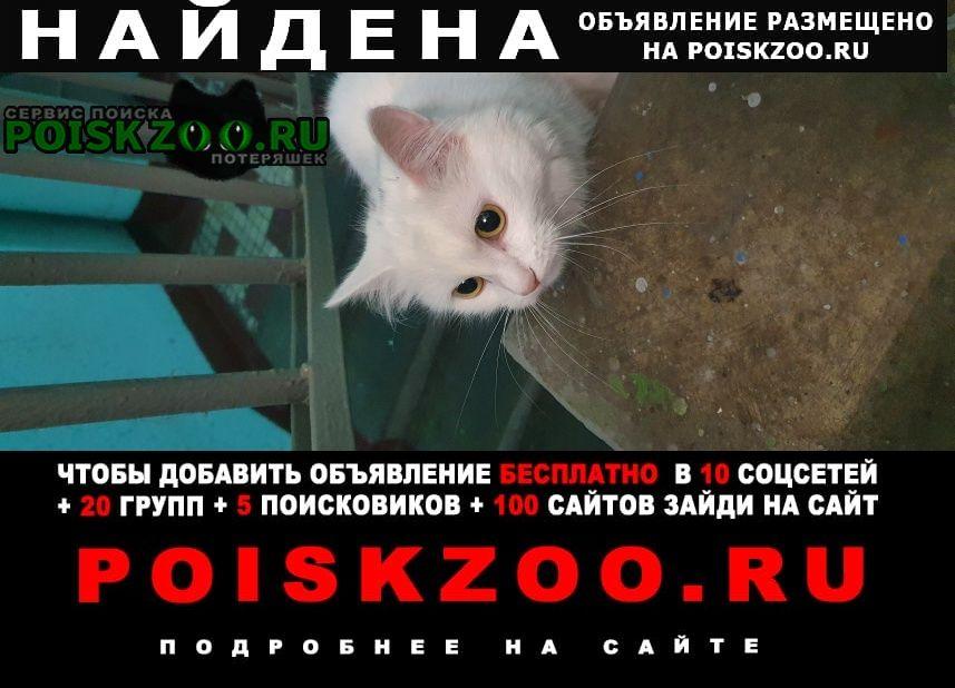 Найдена кошка белая маленькая Москва