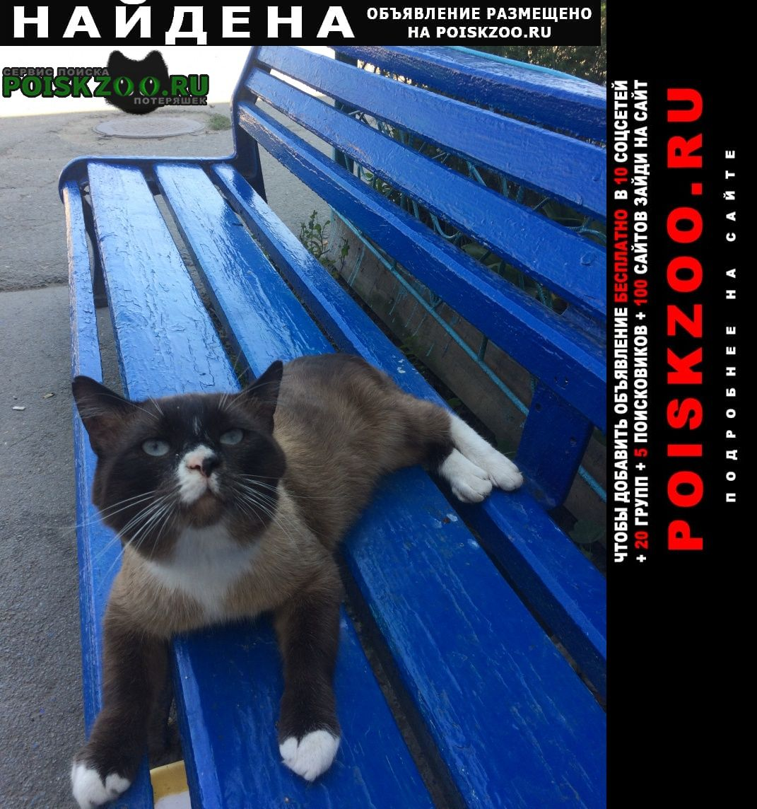Найдена кошка Шадринск