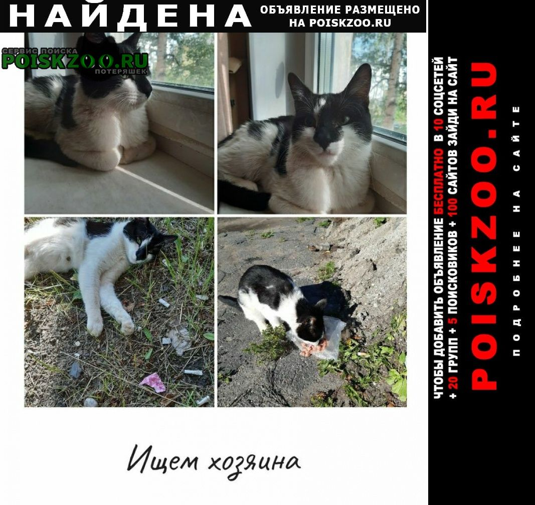 Найдена кошка Северодвинск