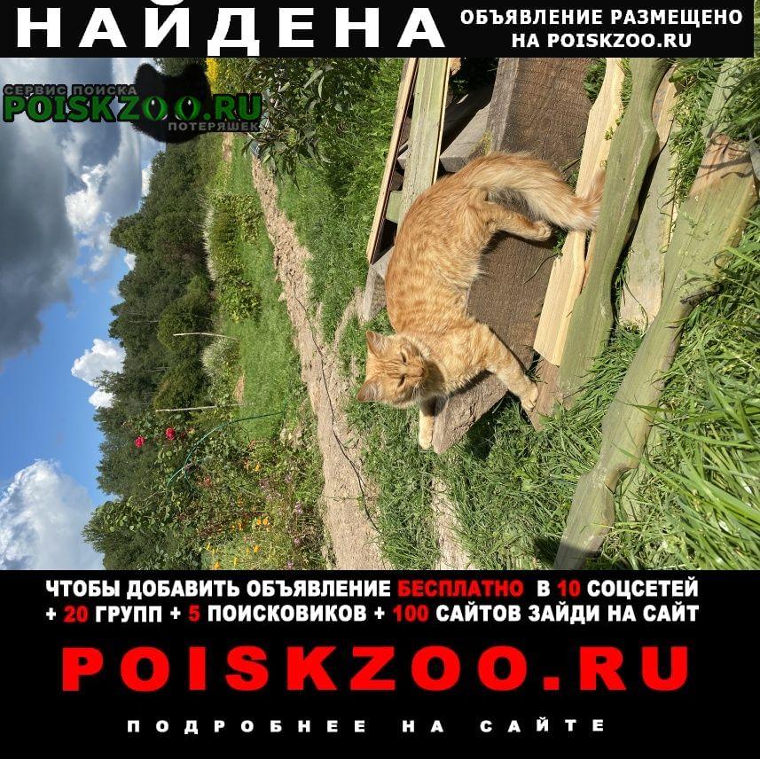 Найдена кошка рыжий молодой кот Дмитров