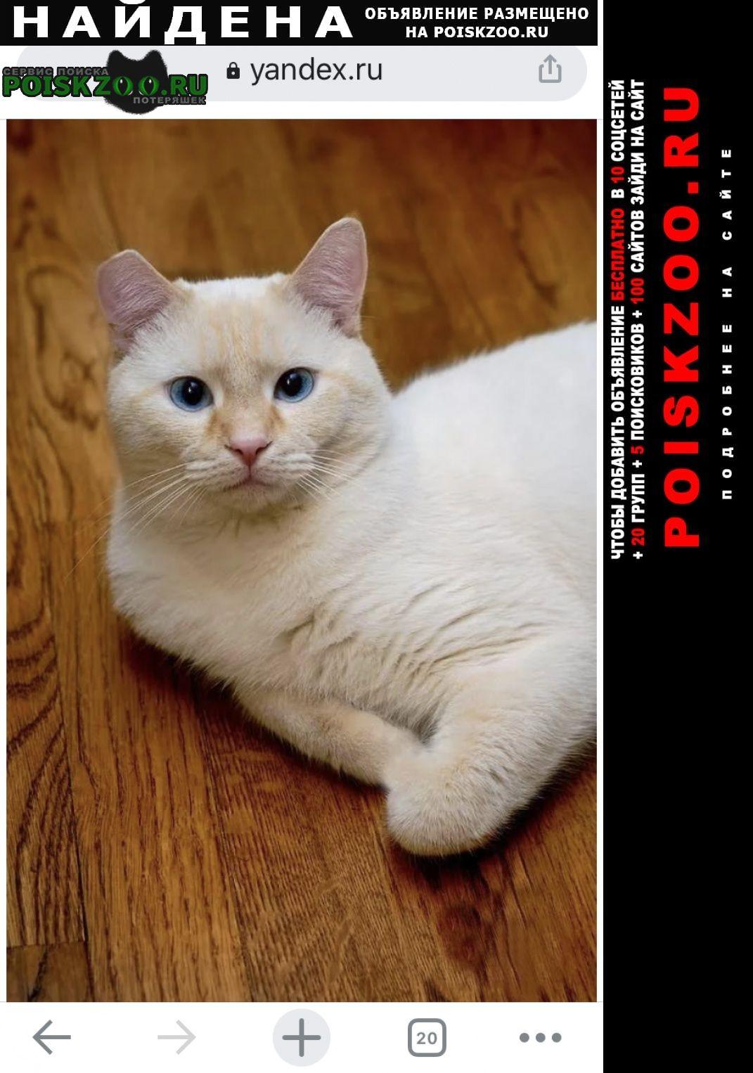 Найдена кошка кот таец сил ред поинт Москва