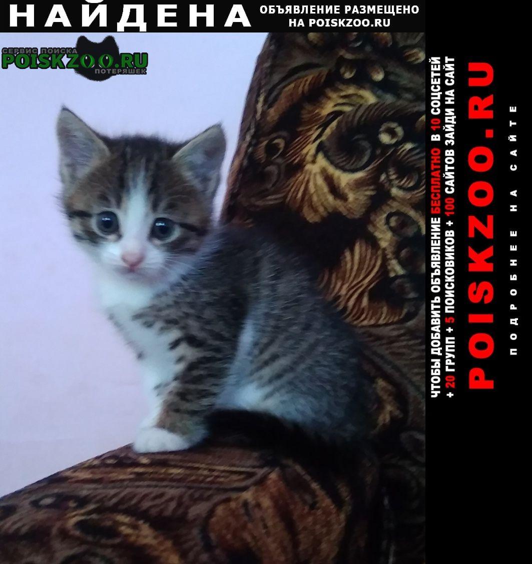 Найдена кошка пристраиваются котята Краснодар