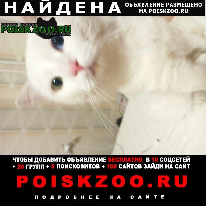 Найдена кошка Некрасовка
