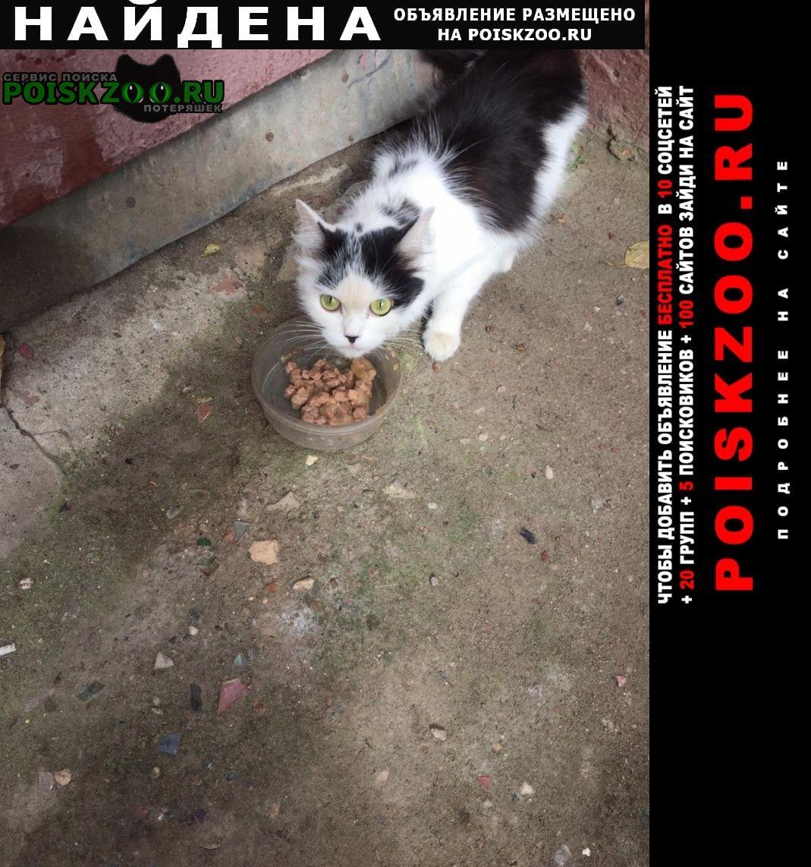 Найдена кошка черно-белая Москва