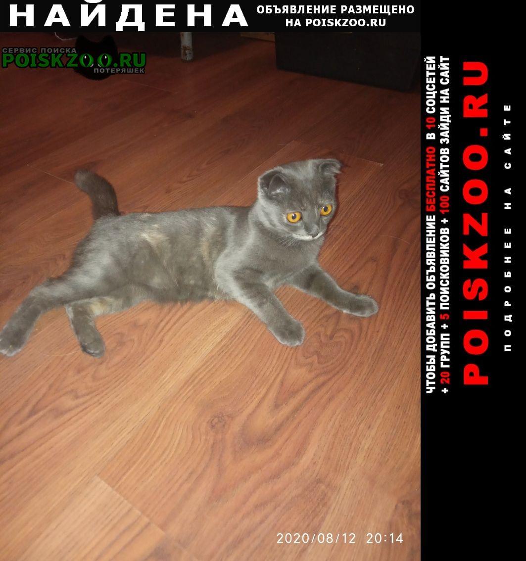 Найдена кошка Новочеркасск