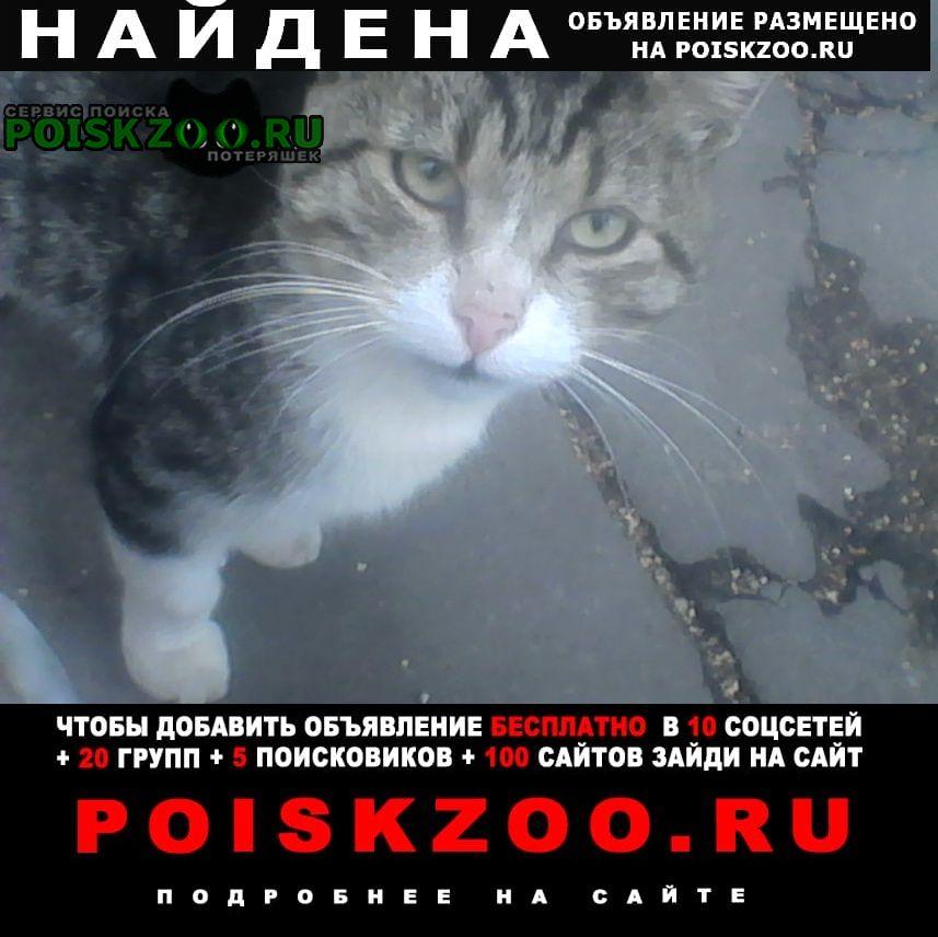 Найдена кошка предположительно кот Тверь